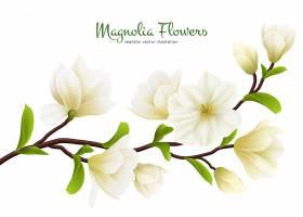 彩色写实白玉兰花卉构图配以绿色书法描写_74989560101