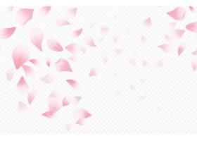 春光明媚春暖花开白色背景上孤立的樱花_125905890101