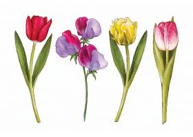 水彩画春季花卉收藏_122961760102