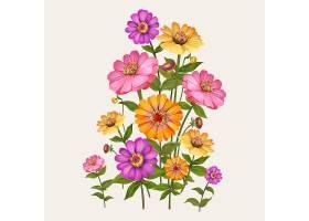 美丽的百日菊开花植物插图_40421060101