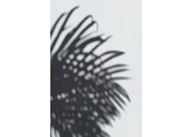 白墙上棕榈叶的影子_39936050102