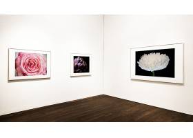 墙上的花卉艺术品收藏_35748730102