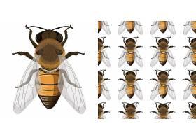 蜜蜂和不起眼的背景_127355510101