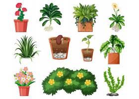 在白色背景上隔离的盆栽中的一组不同的植物_127355100101