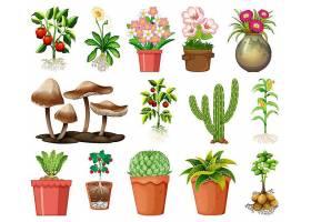 在白色背景上隔离的盆栽中的一组不同的植物_127355270101