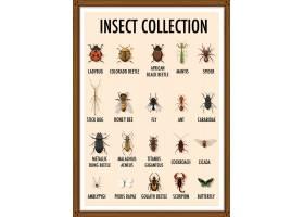 一套木制框架内的昆虫收藏品_12321635