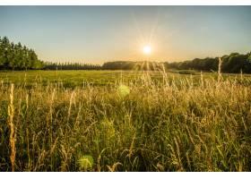 远处绿草如茵的田野和树木阳光在天空中闪_1075957201