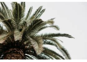 隔绝在多云天空背景上的棕榈树的特写镜头_1306170001