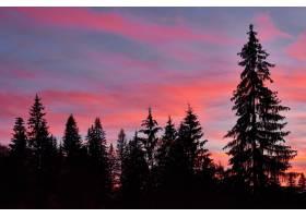雄伟的天空粉红色的云朵映衬着暮色中的松_1051937401