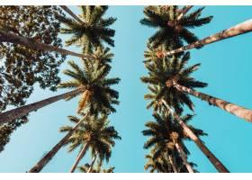 里约热内卢阳光和蓝天下棕榈树的低角景观_1039978601