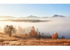 雾林中秋树林立的壮观景观喀尔巴西亚乌_1051471801