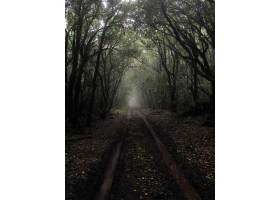 雾气弥漫的高大树木中间一条泥泞小径的垂直_795734101