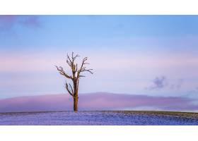 美丽的紫冬夕阳_1321069901