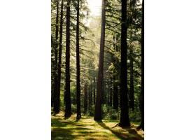 美丽的森林风光_767856801