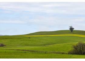 美国加利福尼亚州佩塔卢马晴空下起伏的牧场_1030300301