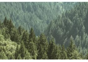 航拍一片长满松树的美丽森林_767794901