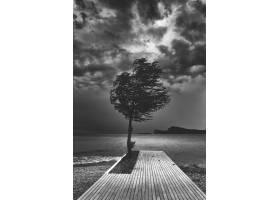 海边木制码头上的一棵树的美丽黑白照片_790224301