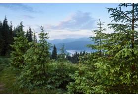 旅行徒步旅行夏天的风景山绿草树_1000158001
