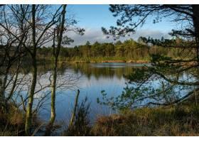 湖边森林里树木的美丽景色_1306074901