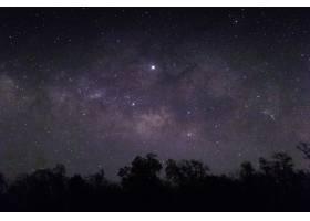 满天繁星和下面树木的剪影_1007479801