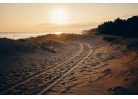 夏季在粉红色的天空大海和树木的沙滩上拍_1128461201