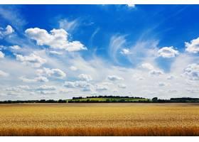夏日的田野映衬着蓝天美丽的风景_696336601