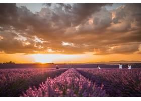 多云天空下一片美丽的紫色英国薰衣草花的横_828147401