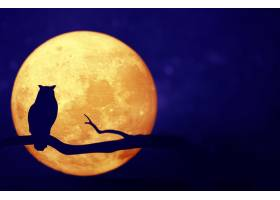 夜空中的满月_276956701
