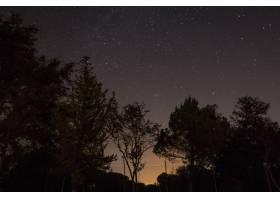 夜里繁星点点的天空下的树木剪影_1075891301