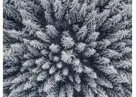 从空中俯瞰白雪覆盖的冷杉树上美丽的冬季风_1306100801