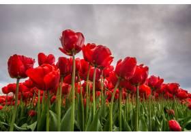 低角度拍摄的一朵红花背景是多云的天空_1058380001