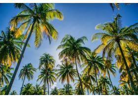 低角度拍摄的椰子树在蓝天的衬托下阳光透_1037628501
