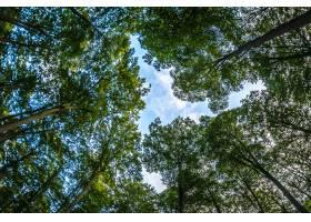 低角度拍摄蓝色多云的天空和长满树木的森林_993238701