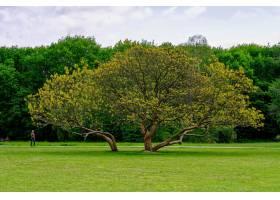 公园中央长着一棵树的美丽照片上面长满了_1285835401