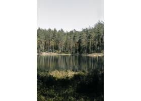 公园湖面上高大树木倒影的垂直镜头_1323581201