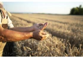 农民的手和地里的小麦作物_1145086201