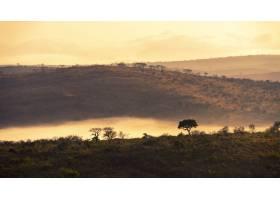南非令人着迷的丛林风光_1306089301