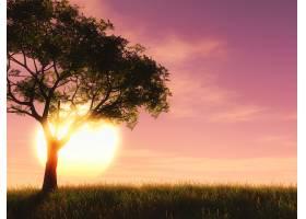 3D树衬托着夕阳的天空_376680301