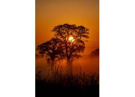 一些美丽的树木和背景中的落日的垂直镜头_828116901