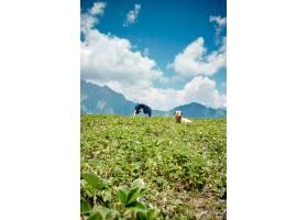 一名年轻女子在自然环境中做瑜伽练习狗坐_1306079001
