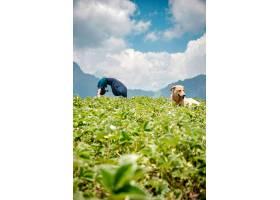一名年轻女子在自然环境中做瑜伽练习狗坐_1306166901