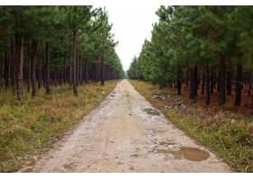 一条泥泞的小路穿过令人惊叹的高大树木的美_1030301001