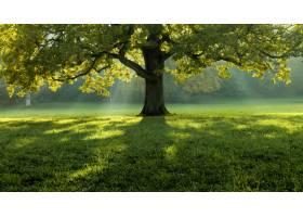 一棵美丽的树在长满草的田野中央背景是树_1300586101