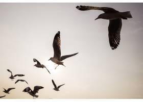 一群海鸥在天空中飞翔_353206601