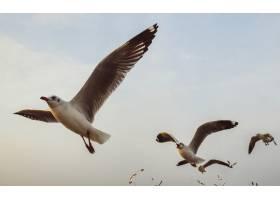 一群海鸥在天空中飞翔_353206801