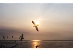 一群海鸥在天空中飞翔_353206901