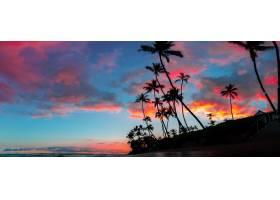 高大的棕榈树和天空中令人惊叹的红色和紫色_7841624