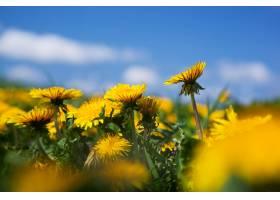 黄花夹杂着其他花朵_946165