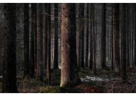 黑暗森林中光秃秃的高大树木_8857997