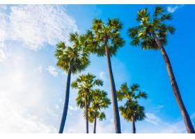 蓝天上美丽的棕榈树_3517021
